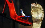 Кобра на страже босоножек