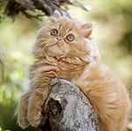 Алмазы …из кошачьей шерсти