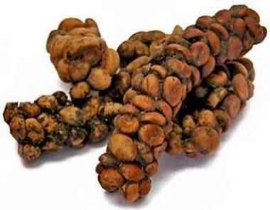 Самый дорогой в мире кофе делают из экскрементов зверька лювака