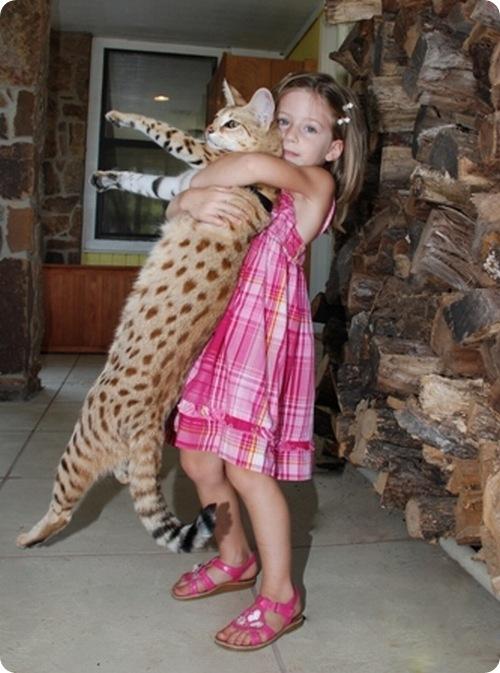 Самые дорогие домашние кошки мира