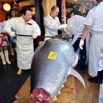 Из голубого тунца стоимостью в $ 736.000 приготовили 10.000 порций деликатесного лакомства