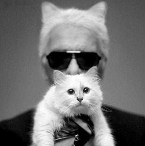 Карл Лагерфельд создал люксовую серию аксессуаров для любимой кошки
