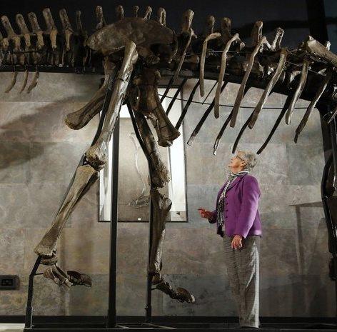 Посетителей гипермаркета Дубаи Молл в торговом зале ждет 24-метровый ископаемый ящер