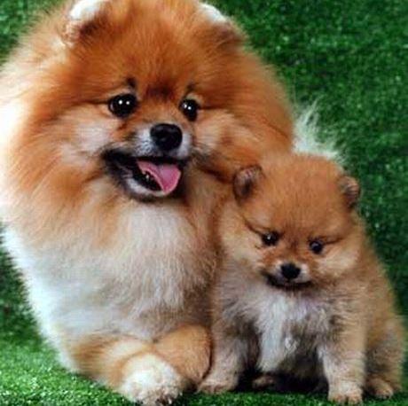 Топ-5: самые модные декоративные собаки мира