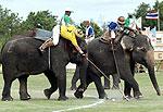 Настоящие эстеты играют в поло зимой и на слонах