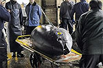 Самый дорогой тунец в мире был продан за $400.000