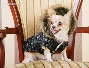 Самая стильная собака Великобритании коллекционирует наряды