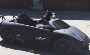 Канадский диджей подарил своему коту мини-копию Lamborghini