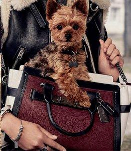Новые «лица» четвероногих друзей знаменитостей - для модных брендов женских сумочек