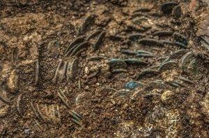 Фермер из Швейцарии нашел у себя на участке древнеримские деньги