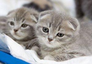 Итальянский парк для кошек