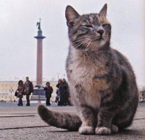 Мировая достопримечательность - эрмитажные коты