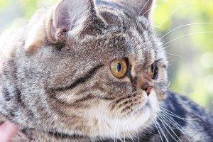 Роскошная порода кошек Флэппиг возглавит рейтинг обаятельных питомцев