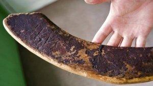 Самую древнюю хоккейную клюшку на земле можно купить на интернет-аукционе Ebay