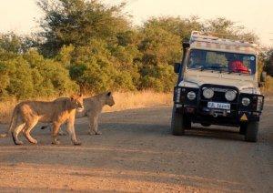 «Погулять по Африке» теперь можно за $260.000