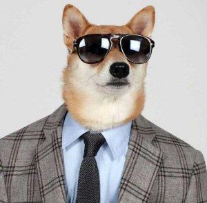 Пёс на подиуме завоевал сердца зрителей