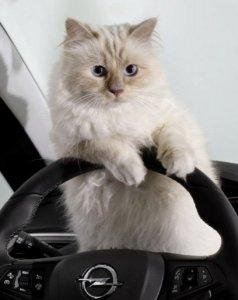 Шупетт и Opel Corsa: кошка Лагерфельда рулит!