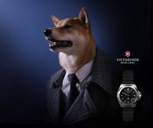 Семейный бизнес: $15.000 ежемесячно, используя домашнюю собаку