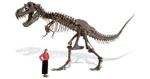 На Новый год можно украсить дом скелетом ящера всего за $100.000