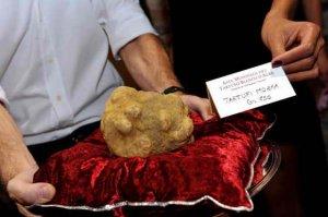 Огромный белый трюфель оценили в $1.000.000