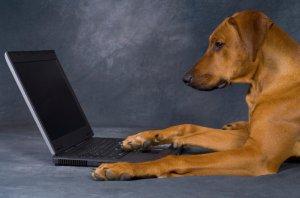 Woof  - Facebook для собак