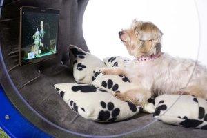 Samsung создаёт элитные собачьи будки (видео)